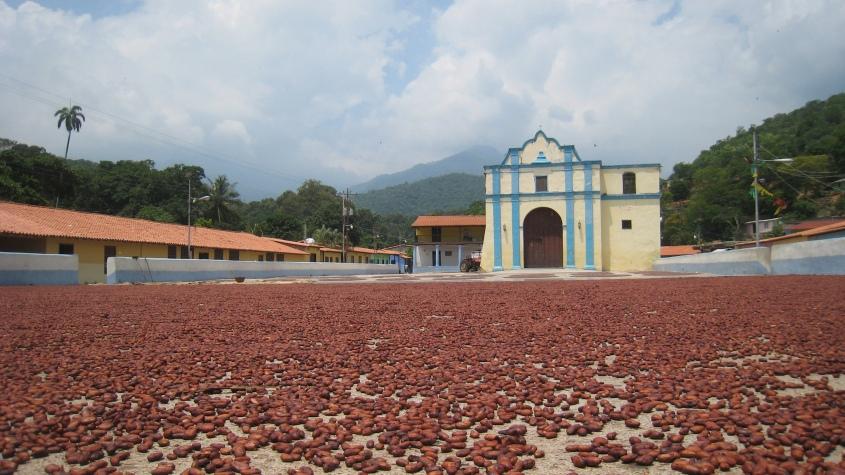 chuao-cacao-chocolate-venezuela